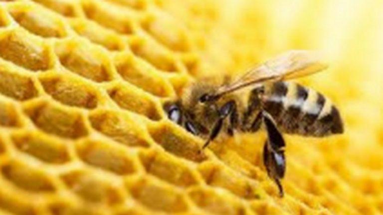 """Corso di formazione """"Bees"""""""