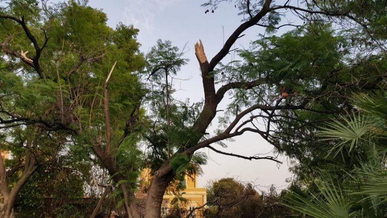 Mettere in sicurezza l'area giochi del Parco Gandhi