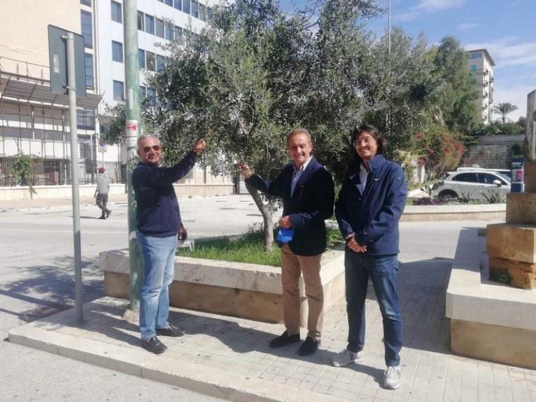 Raccolta olive terreni comunali, il 27% dell'olio andrà alle famiglie bisognose